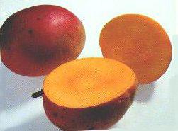 Acheter Mangue