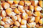 Acheter Maïs