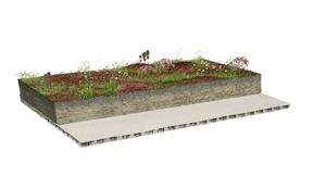 Acheter Sedum cuttings on mineral substrate