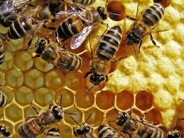 Acheter Produits apicoles