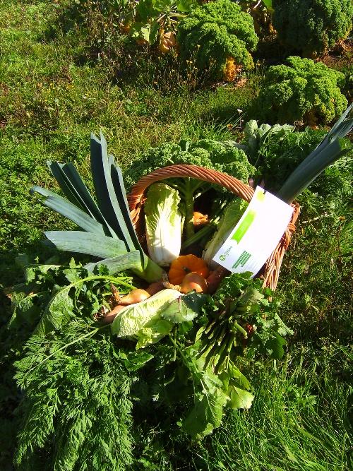 Acheter Les légumes bio