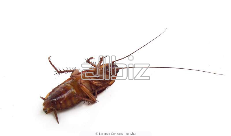 Acheter Technical insecticide Bendiocarb