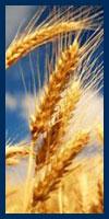 Acheter Commodities for pharmaceutic industry
