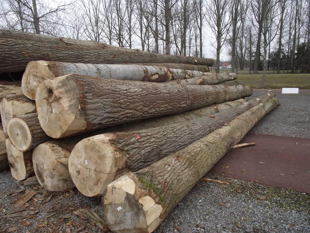 Acheter Pine, poplar, oak, beech