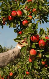 Acheter Fruits frais