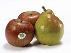 Fruits durs