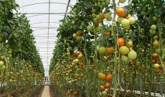 Engrais azotés pour agriculture et horticulture