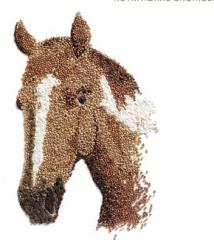 Feed for Horses