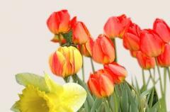Semences des Fleurs