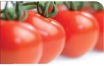 Tomates Gaheris RZ HF1