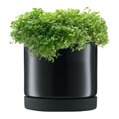 Flower pot BODUM POT
