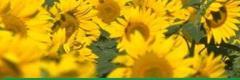Insecticide, herbicide, fungicide, fumigant