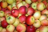 Fruits à pépins. Pomme
