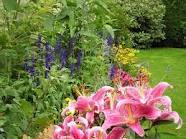 Engrais  jardin