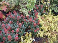 Erables du Japon, azalées et rhododendrons