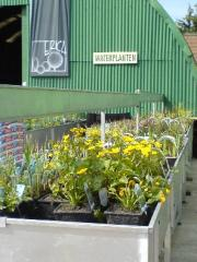 Plantes palustres
