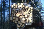 Particules en bois