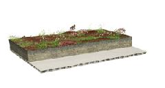 Sedum cuttings on mineral substrate
