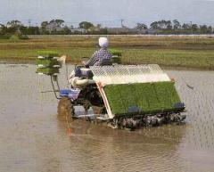 Rice Transplanter PG