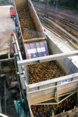 Trucks unloading in sugar industry