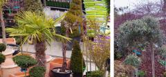 Plantes méditerranéennes et agrumes