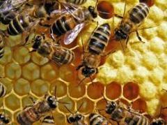 Produits apicoles