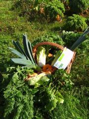 Les légumes bio
