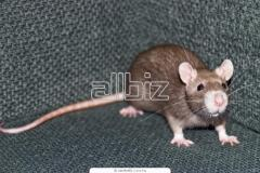 Rodenticide BROMADIOLONE 0.25% CONCENTRATE