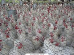 Amino acids for stock-breeding Alimet®