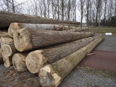 Pine, poplar, oak, beech