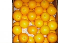 Berkane Navel Orange