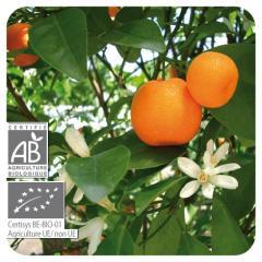 Huiles essentielles Mandarinier