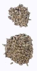 Seed yield enhancement traits