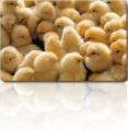 Fishmeal analogues